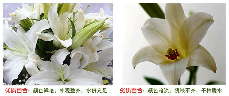 鲜花快递(www.viphua.com)百合花对比