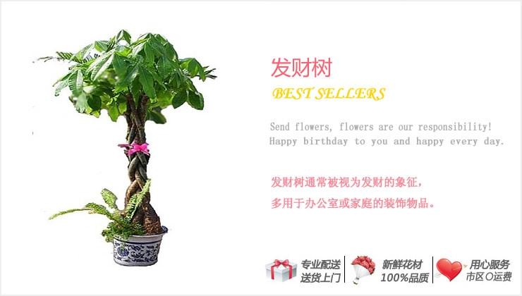 发财树—快送鲜花网|绿植花卉|异地送花|网上送鲜花|盆栽花卉|办公室绿植|市内绿植