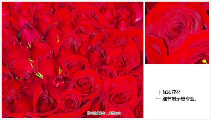 红玫瑰大图细节
